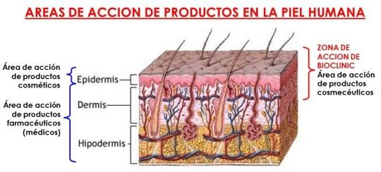 Anatomía y fisiología de la piel | CURSOS BIENESTAR INTEGRAL
